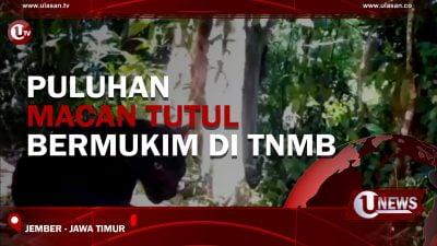 [Video] Puluhan Macan Tutul Bermukim Di TNMB